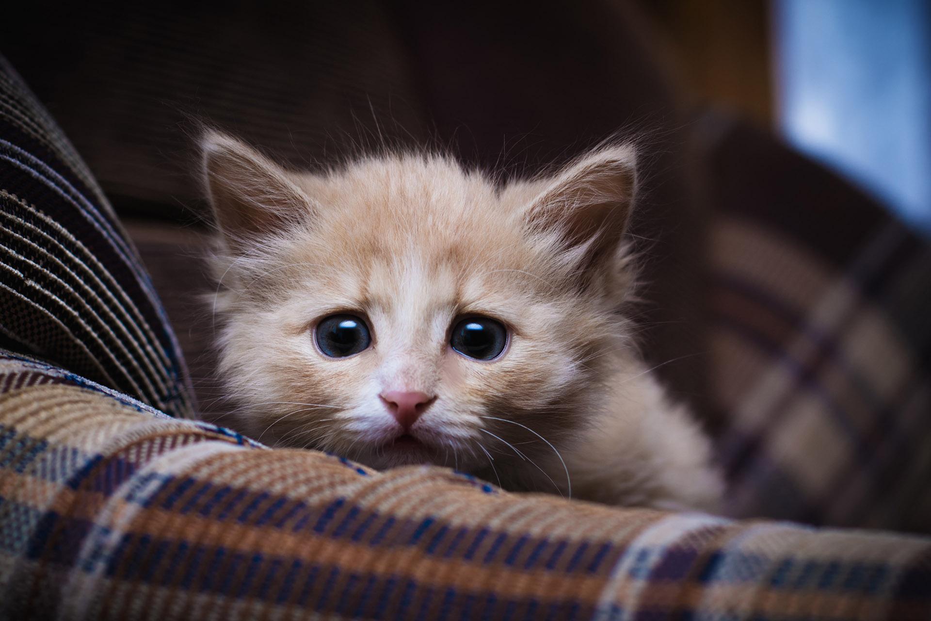 Jak postępować z kotem adoptowanym ze schroniska?